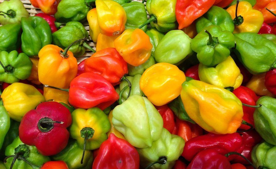 Papriky