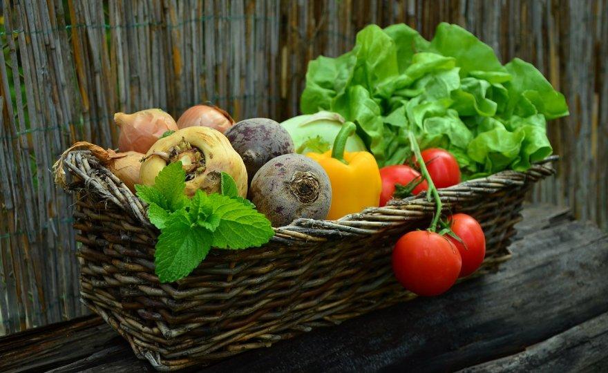jaký je rozdíl rozdíl mezi veganem a vegetariánem?